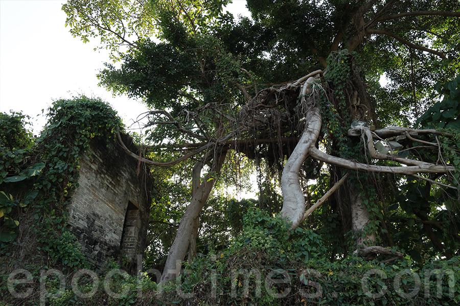超強颱風「山竹」吹襲後廟宇兩層坍塌,形成的獨特的「空中之樹」一景。(陳仲明/大紀元)