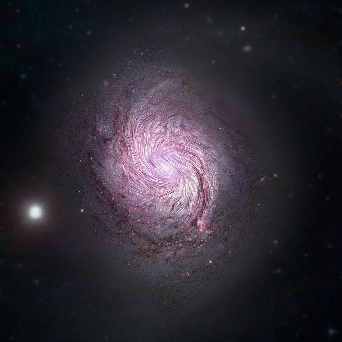NASA的移動觀測台SOFIA觀測到螺旋星系M77的磁場分佈情況,科學家認為這有助於解釋銀河系旋臂的成因。(NASA/SOFIA)
