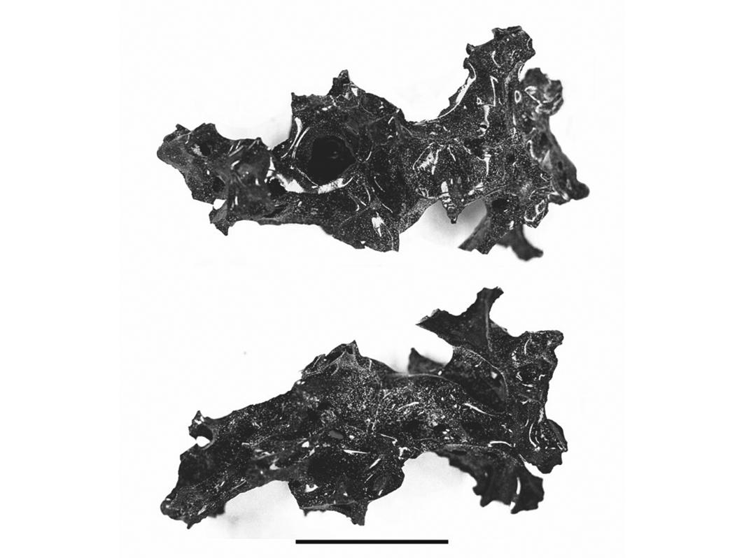 考古學家在龐貝城遺址發現的這塊人腦化石,看起來就像一個黑色閃亮的石頭碎片,是至今考古學上一項罕見、不可思議的發現。(The New England Journal of Medicine)