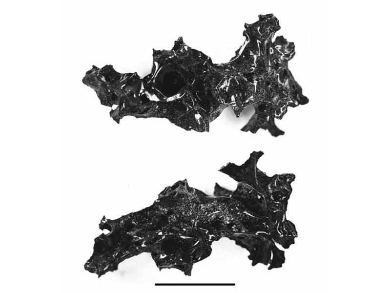 考古發現罕見龐貝城 火山噴發遇難者腦化石