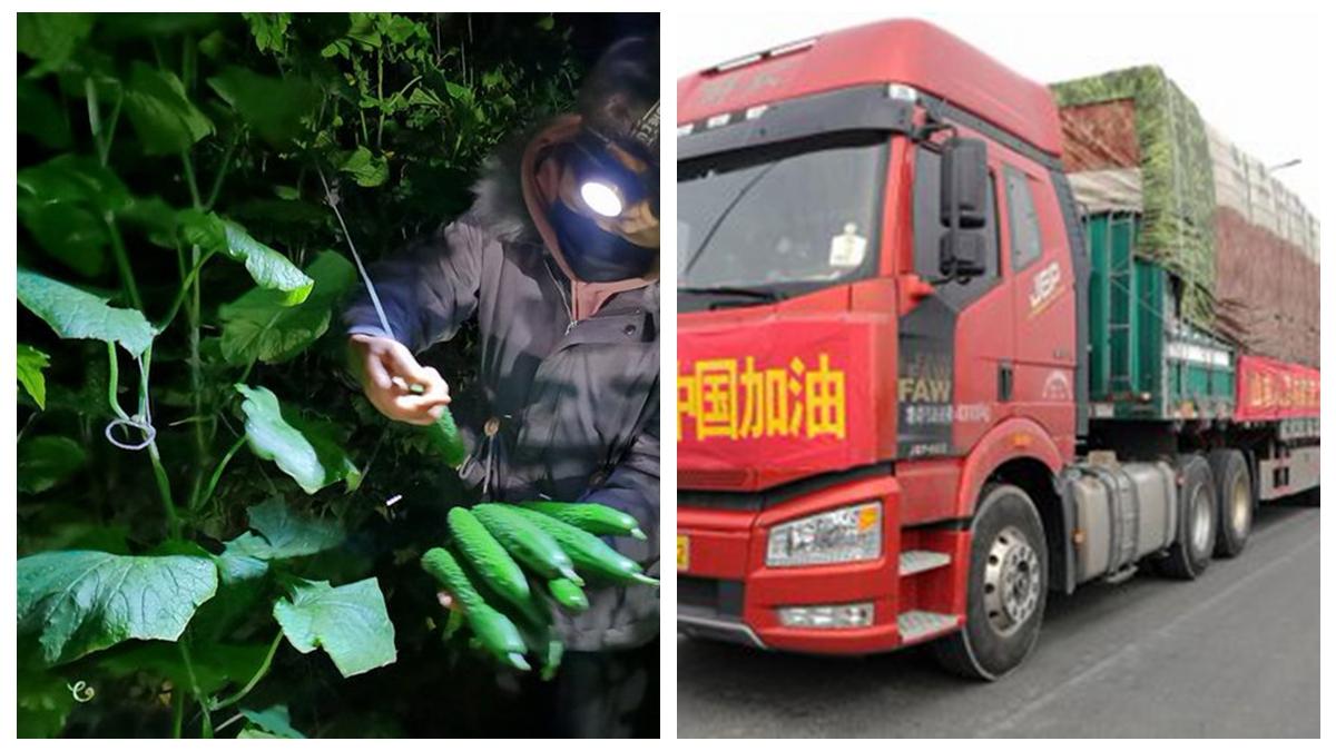 山東壽光捐贈350噸蔬菜給武漢,被官方搶去,官媒與紅會為此打起來了。(合成圖片)