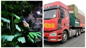 山東捐350噸蔬菜被搶 官媒與紅會打起來了