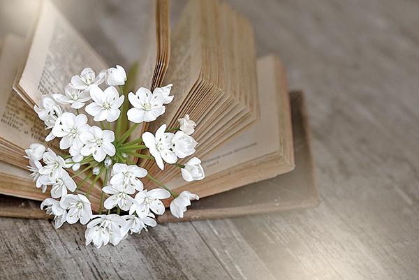 春天鮮蔬韭菜的花,帶給人暖暖的情誼(pixabay)
