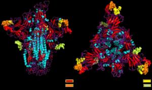 武漢病毒疑植入愛滋基因 哈佛專家:耐人尋味