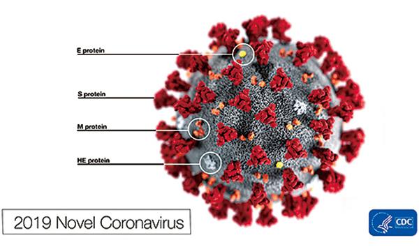 美國疾病控制與預防中心網站刊出新型冠狀病毒的示意圖,以及美國機場如何篩檢此病毒。(CDC)