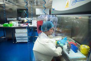擅改原始圖紙 武漢P4實驗室失去關鍵病毒回收功能