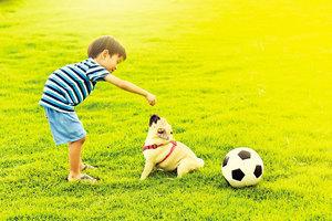 親和的陪伴者 8種性格溫暖的寵物狗
