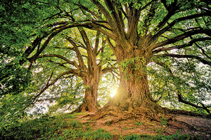 銀釭詩約:樛木.深深的祝福