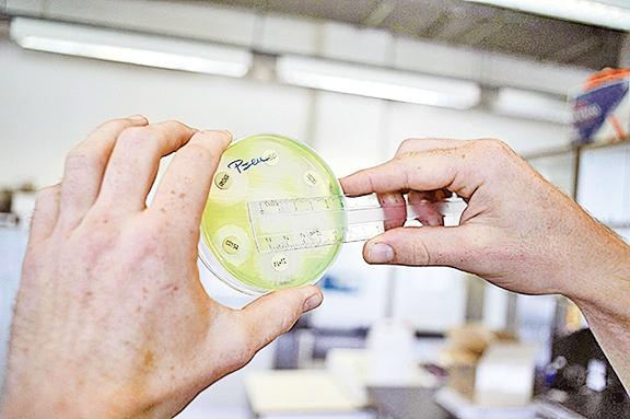 科學家嘗試尋找新的抗生素。(AFP/Getty Images)