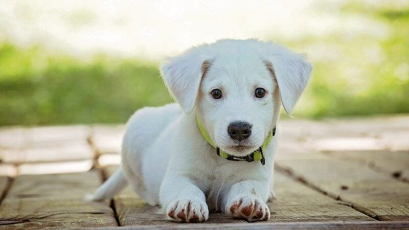 2月12日,溫州永嘉黃山村為防止狗傳染中共肺炎疫情,撲殺全村犬隻。示意圖(pixabay.com)