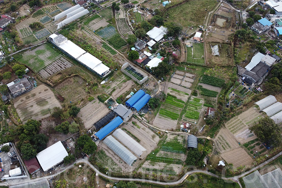 歐羅有機農場負責人黃如榮對香港農業的前景有信心,計劃未來兩三年擴充農場規模。(受訪者提供)
