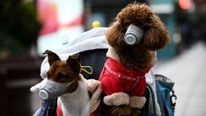 狗測出中共病毒陽性 香港所有患者寵物都將隔離