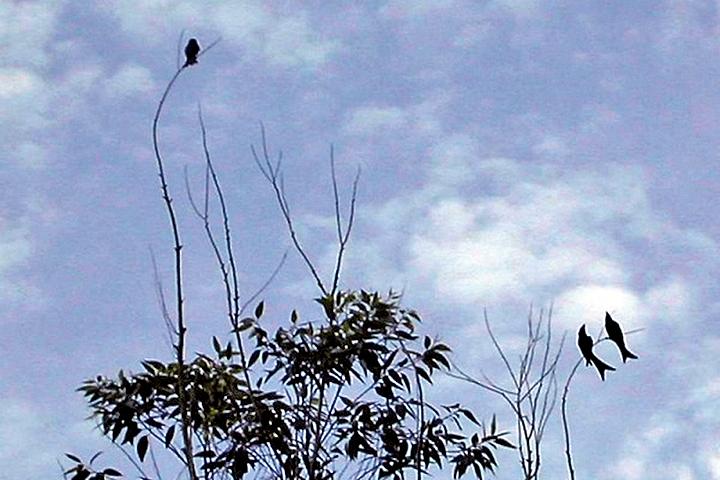 心靈剪影 :  遊鳥