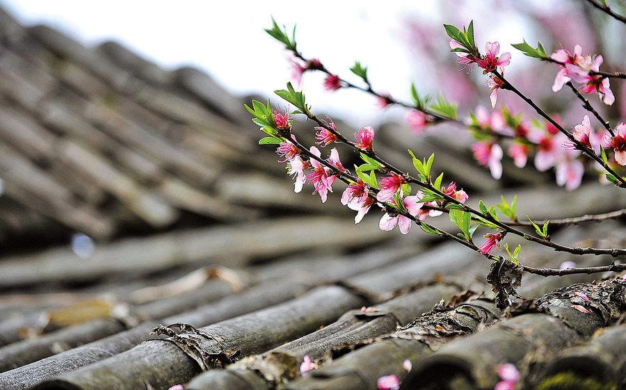扁康療法系列講座 第四章 來自雞龍山的信 ——重新找回幸福的人(一)