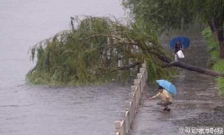 日前,北京大部分地區突降暴雨、大暴雨,致使一條河內的小魚衝上人行道,被一名路人扔回河裏,網友稱這名路人為「救魚哥」。(網絡圖片)