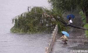 北京突降暴雨水位漲 河邊現「救魚哥」