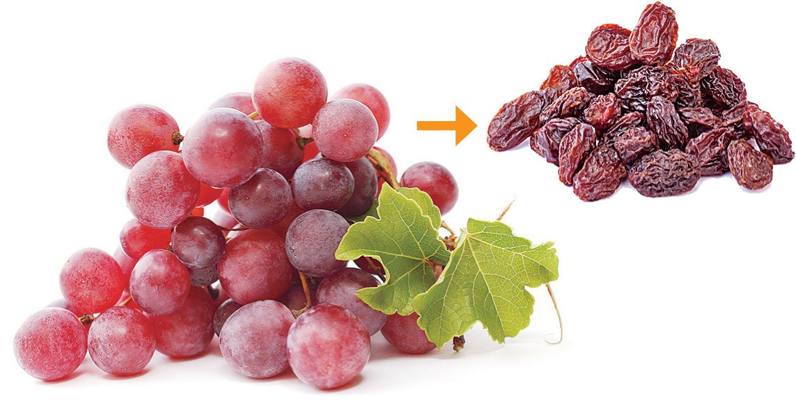 水果烘成水果乾後,糖份和熱量也濃縮,吃多容易引發肥胖、血糖增加等問題。