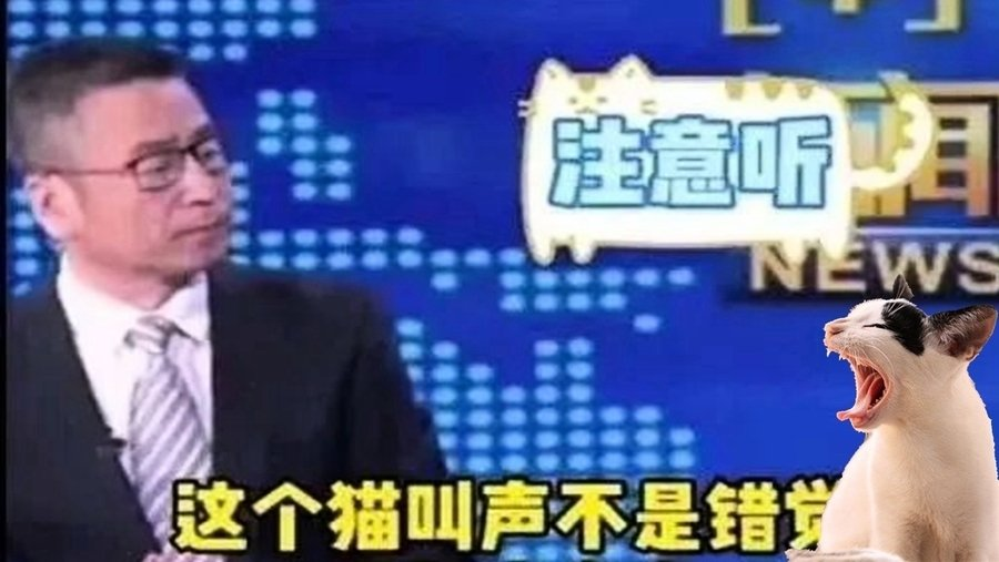 央視貓叫上熱搜 多檔新聞直播驚傳詭異叫聲