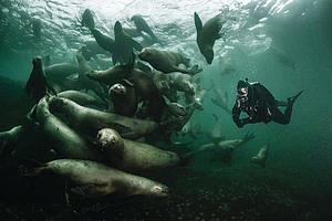 潛水被海獅包圍   攝影師:太神奇了!