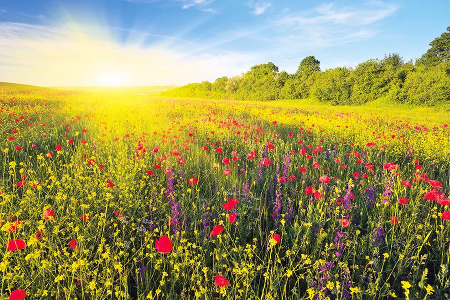 【心靈陽光】花香襲來