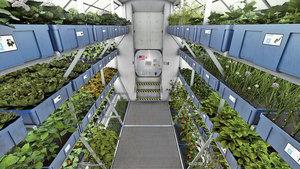 研究:太空生菜和地面生菜一樣健康