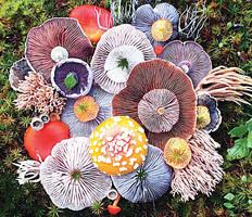 藝術家隱居小島 收集罕見蘑菇成「大自然集錦」