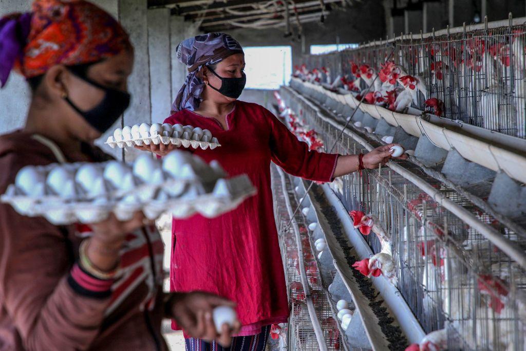 2020年3月17日,擔心中共肺炎病毒傳播,農場工人戴著口罩工作。(RAKESH BAKSHI/AFP via Getty Images)