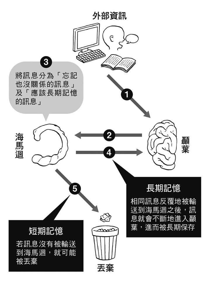 了解大腦特徵,有利於長期記憶。(圖/方言文化)