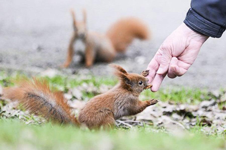 餵食野生動物會破壞其社會結構