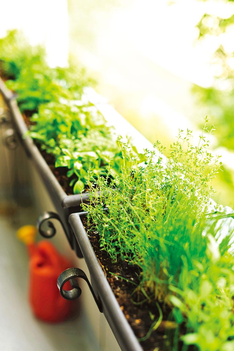 選擇栽種在陽台的植物時,應該了解光照的情況。(Fotolia)