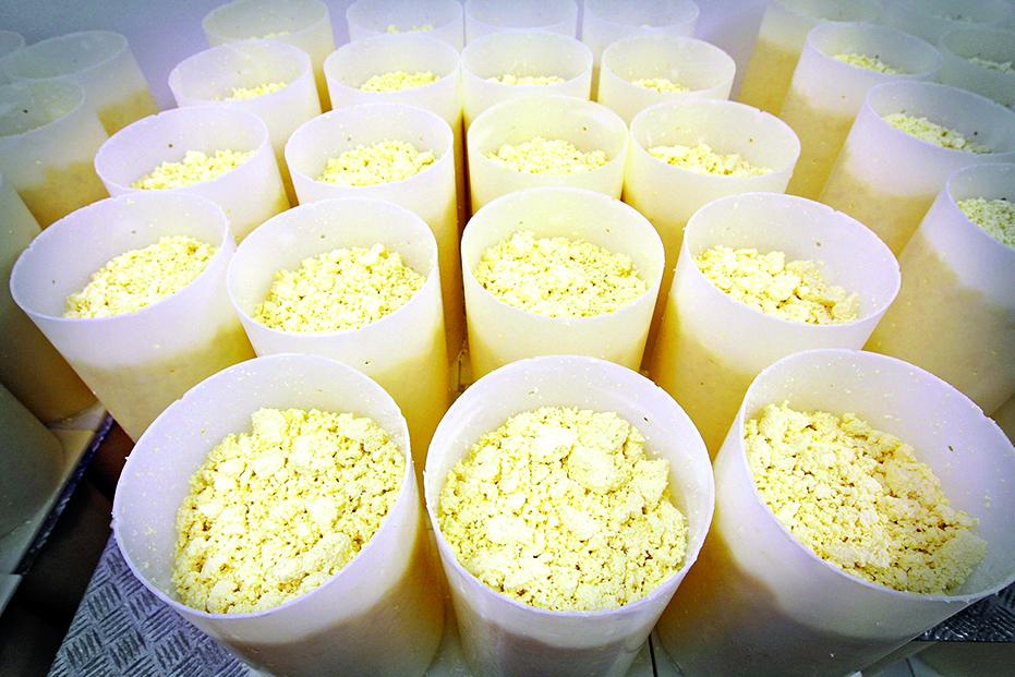 凝乳被切成小塊以去除乳清與水份,再壓入模具內成型。