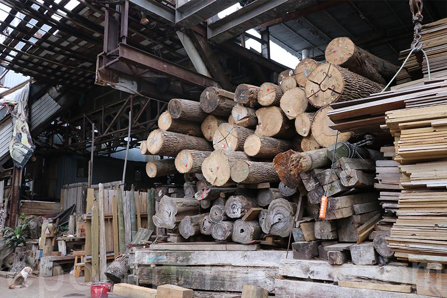 志記𠝹木廠內堆積如山的木材。(陳仲明/大紀元)