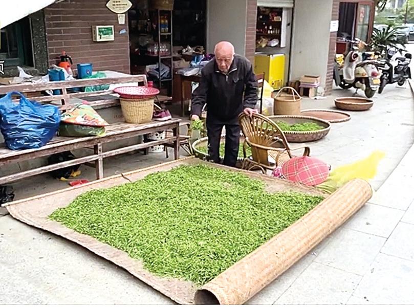 【圖片新聞】 疫情影響西湖 龍井茶價格腰斬