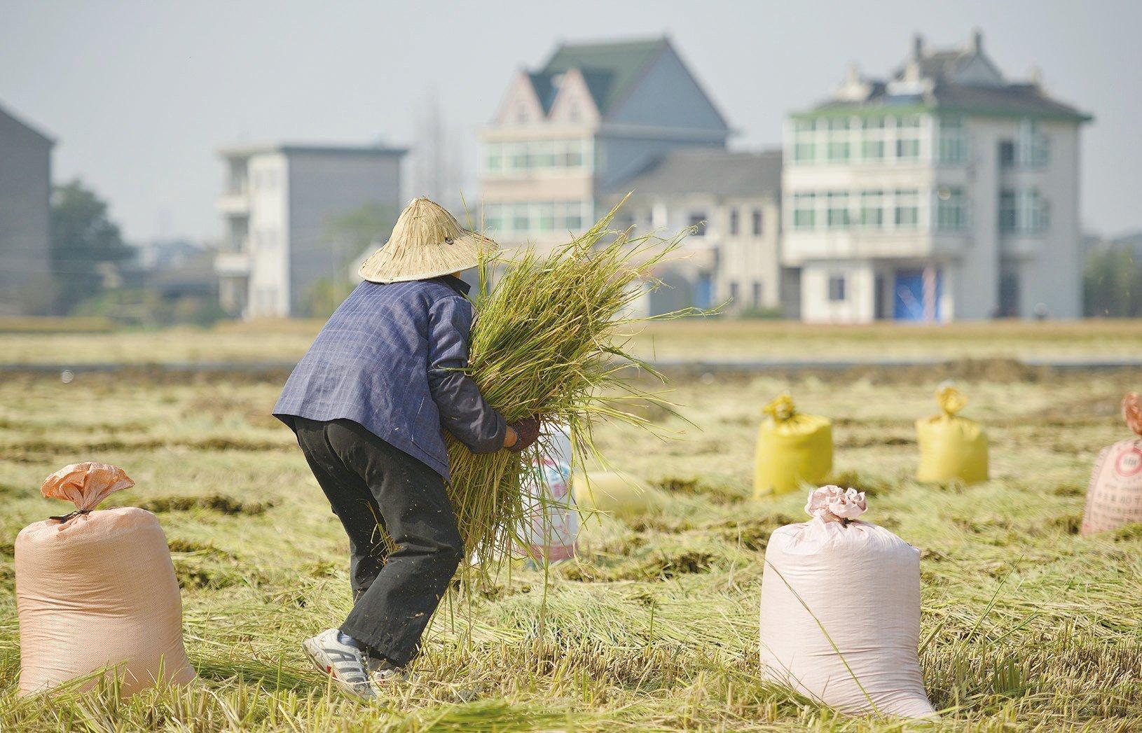 中共肺炎的影響下,多國自保禁糧食出口,中國或將爆發糧食危機。(Getty Images)