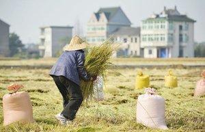 多國自保禁糧食出口  中國糧食危機必然到來