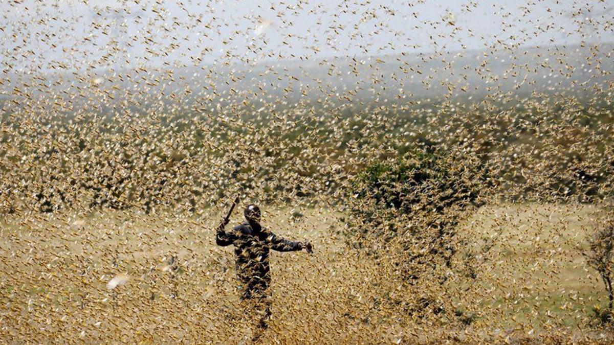 有報導稱,此次蝗群令人恐懼,累積約四千億隻,猶如186艘重10萬噸的航空母艦在頭上飛過。(TONY KARUMBA/AFP via Getty Images)