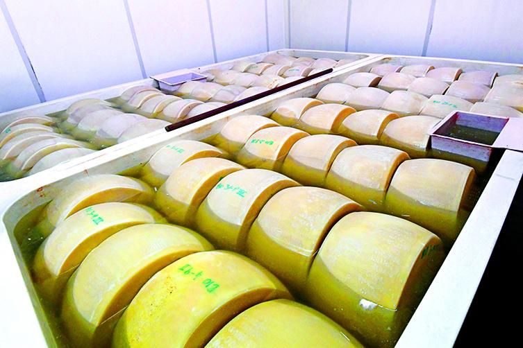 製作巴馬臣芝士時,需要讓芝士在濃鹽水裏進行20~25天的鹽漬。