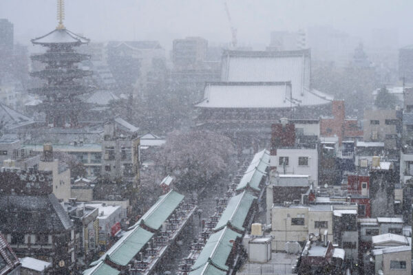 東京都2020年3月29日降雪到中午12時止已積雪1厘米,是時隔51年再度出現櫻花滿開後還積雪達1厘米,氣象新聞公司表示情況相當罕見。(Tomohiro Ohsumi/Getty Images)
