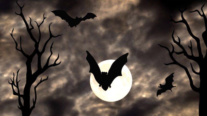 大量蝙蝠從空中墜落屍體遍地,引發民間恐慌。示意圖(pixabay.com)