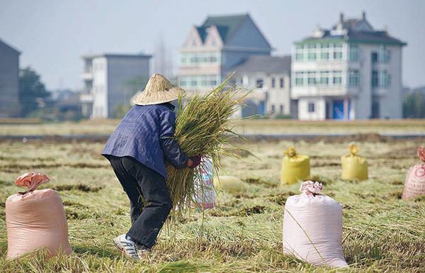 中國可供耕種的土地,幾乎完全開墾完畢,沒有多少潛力。(Getty Images)