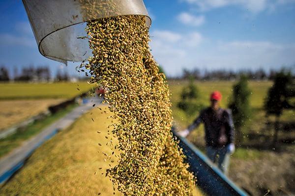 中共病毒瘟疫,除造成糧食大量減產外,供應鏈也會出問題,恐引發糧食危機。(Getty Images)