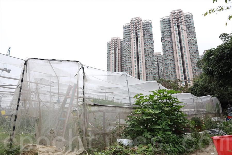 農地保育和發展地產,一直都是城鄉規劃中的兩難議題。(陳仲明/大紀元)