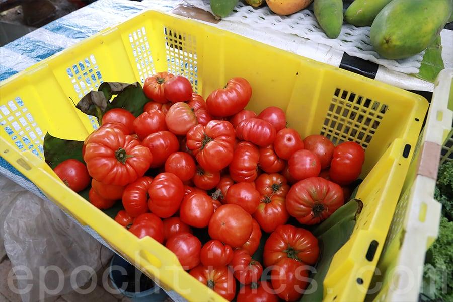 馬寶寶社區農場生產的番茄。(陳仲明/大紀元)