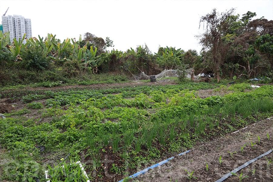 Becky希望香港能夠有健全的城鄉規劃和農業政策。(陳仲明/大紀元)