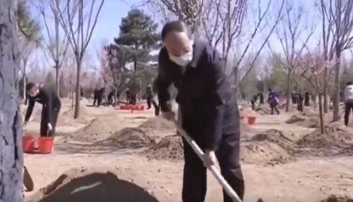 現任中國國家主席王岐山2020年4月3日也陪同習近平參加了植樹活動。(影片截圖)