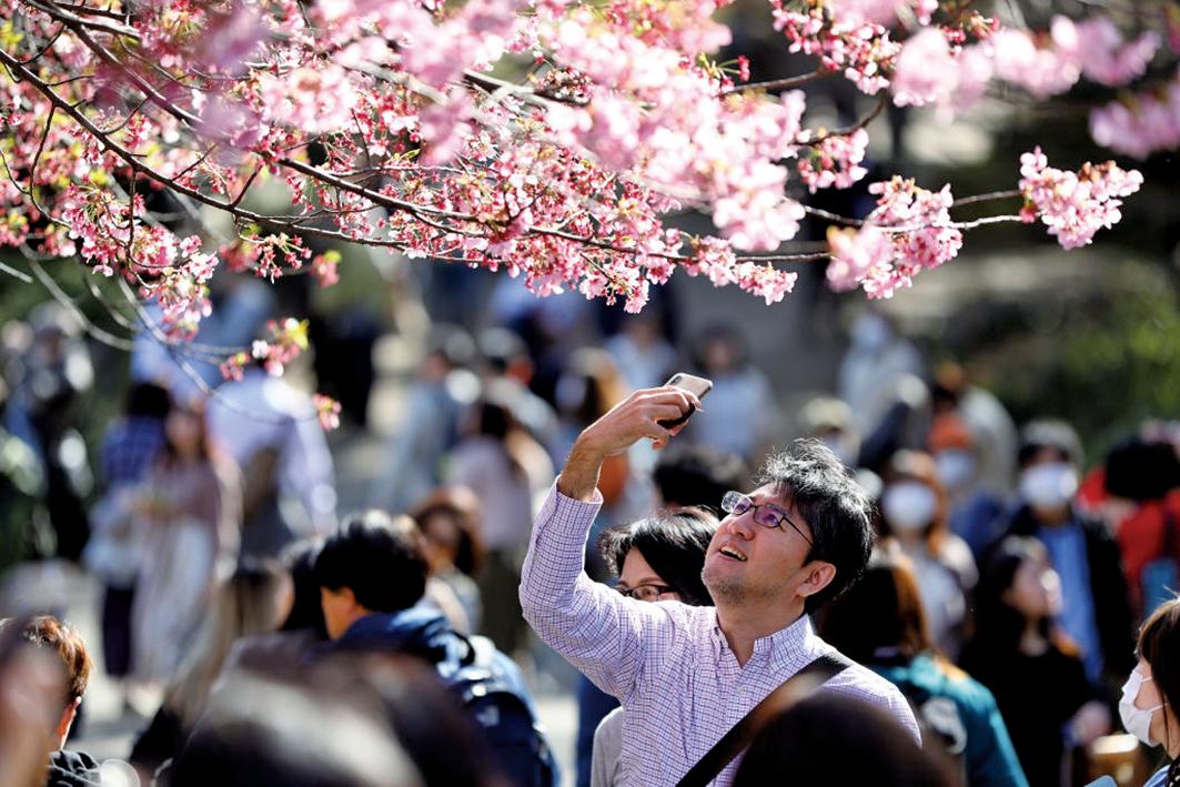 圖為,3月21日,日本民眾出遊賞花。(Getty Images)