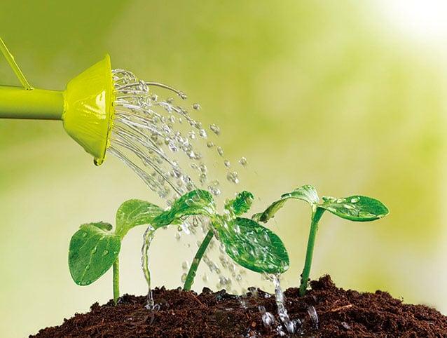 土壤太濕時植物不健康的樣子和缺水時很類似,如果缺乏園藝經驗,很容易澆太多水。(Fotolia)