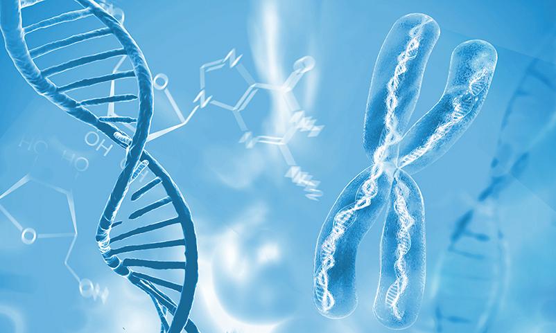 科學家揭秘蛋白如何協作完成DNA修復