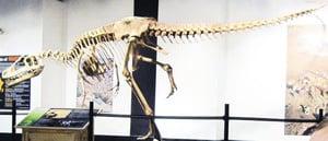 超小前肢肉食恐龍被發現