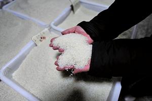 多國暫停出口大米  大陸或面臨糧食緊張
